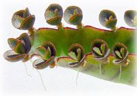 mother-leaf200