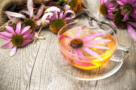 32102155-Echinacea-purpurea-Cup-of-echinacea-tea-on-wooden-table-Stock-Photo